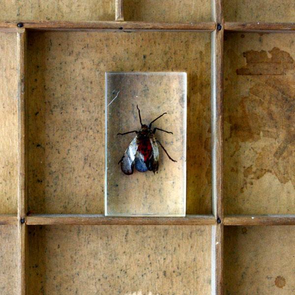 insect epoxyhars